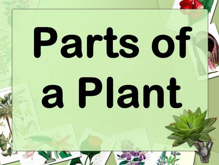 Parts of a Plant. Living Things All living things grow and change. All living things need food, water, and air to live.