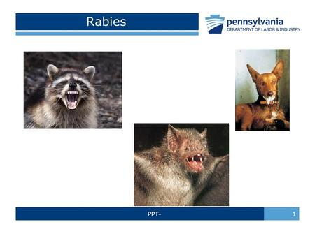 PPT- 1 Rabies. PPT- 2 Rabies Defined: Rabies is a preventable viral disease of mammals most often transmitted through the bite of a rabid animal Return.