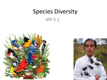 Species Diversity MP 5.1. Species Richness Number of different species in a study area. Higher number of species the richer and healthier the ecosystem.