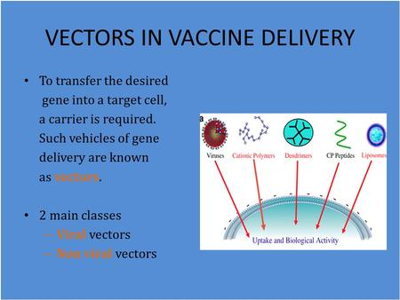 VECTORS IN VACCINE DELIVERY To transfer the desired gene into a target cell, a carrier is required. Such vehicles of gene delivery are known as vectors.