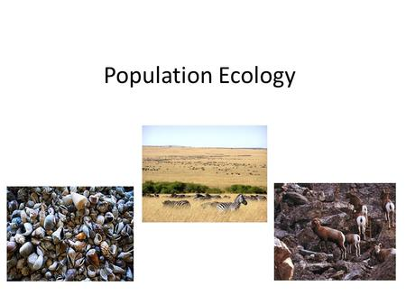 Population Ecology. Characteristics of a Population Population Dynamics: Population change due to – Population Size – Population Density – Population.