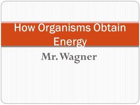 Mr. Wagner How Organisms Obtain Energy. Vocabulary: Metabolism Photosynthesis Cellular Respiration Adenosine Triphosphate (ATP) Anabolic Catabolic.