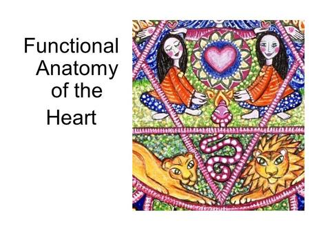 Functional Anatomy of the Heart. Heart Anatomy Approximately the size of your fist Location –Superior surface of diaphragm –Left of the midline –Anterior.
