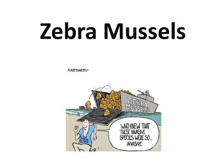 The Zebra Mussel Zebra Mussels. Description The zebra mussel is a small freshwater mussel. Zebra mussels get their name from the striped pattern on their.