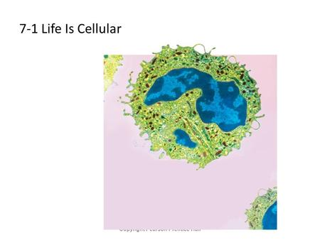 7-1 Life Is Cellular Copyright Pearson Prentice Hall.