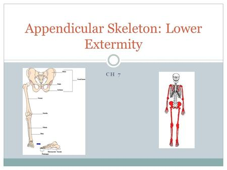 Appendicular Skeleton: Lower Extermity