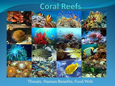 Threats, Human Benefits, Food Web. What are corals? Plants or animals? Plants make their own food Animals depend on outside sources for their nutritional.