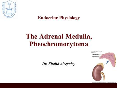 Endocrine Physiology The Adrenal Medulla, Pheochromocytoma Dr. Khalid Alregaiey.