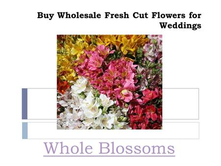 Buy Wholesale Fresh Cut Flowers for Weddings Whole Blossoms.