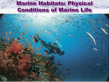 Marine Habitats: Physical Conditions of Marine Life.