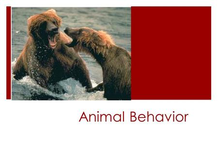 Animal Behavior.  Three major types of behavior:  Innate  Learned  Intelligent.