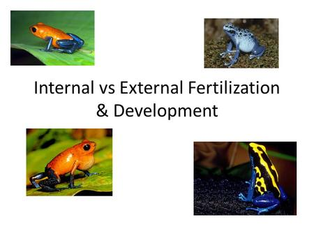 Internal vs External Fertilization & Development.