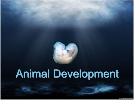 Animal Development. Outline I.Early Stages of Embryonic Development A. Intro B. Fertilization C. Cleavage D. Gastrulation II.Morphogenesis.