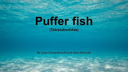 Puffer fish (Tetraodontidae) By Luise Schoenknecht and Gina Ebersole.