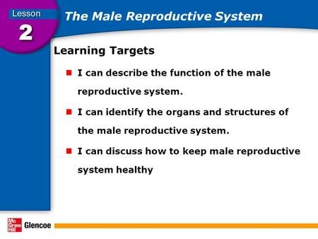 The Male Reproductive System Learning Targets I can describe the function of the male reproductive system. I can identify the organs and structures of.