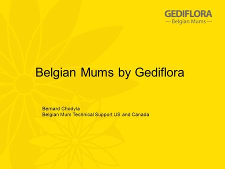 Belgian Mums by Gediflora Bernard Chodyla Belgian Mum Technical Support US and Canada.