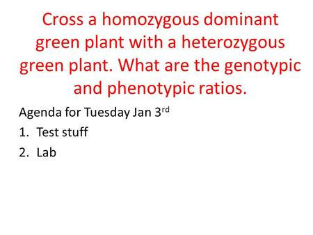 Cross a homozygous dominant green plant with a heterozygous green plant. What are the genotypic and phenotypic ratios. Agenda for Tuesday Jan 3 rd 1.Test.