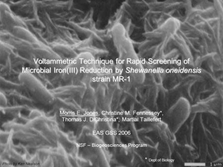 Voltammetric Technique for Rapid Screening of Microbial Iron(III) Reduction by Shewanella oneidensis strain MR-1 Morris E. Jones, Christine M. Fennessey*,