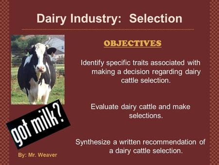 Dairy Industry: Selection OBJECTIVES By: Mr. Weaver Identify specific traits associated with making a decision regarding dairy cattle selection. Evaluate.