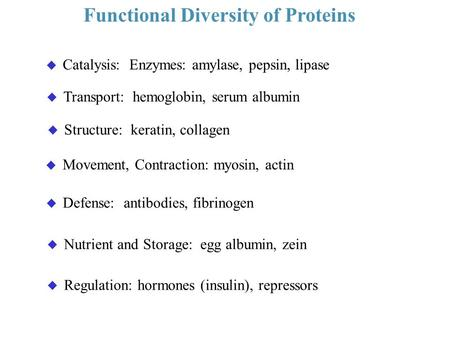 Functional Diversity of Proteins u Catalysis: Enzymes: amylase, pepsin, lipase u Transport: hemoglobin, serum albumin u Nutrient and Storage: egg albumin,