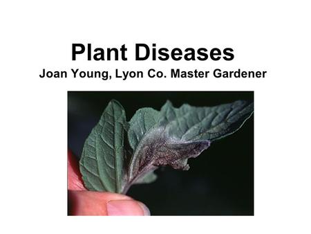 Plant Diseases Joan Young, Lyon Co. Master Gardener.