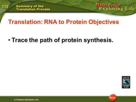 Translation: RNA to Protein Objectives Trace the path of protein synthesis.