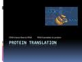 DNA transcribes to RNA RNA translates to protein.