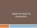 DIGESTIVE TRACT IN RUMINANTS. Ruminants  Reticulum, rumen, omasum, abomasum  Pseudo-ruminants: camel w/ three compartments.  Extensive pre-gastric.
