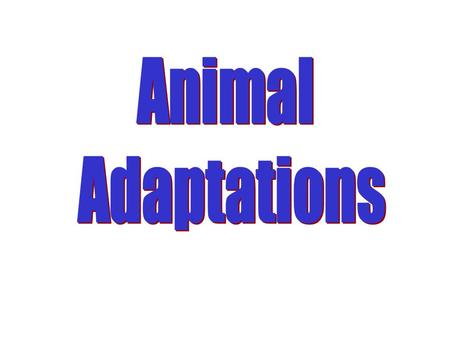 Animal Adaptations All living things have to be suited to their environment if they are to survive.
