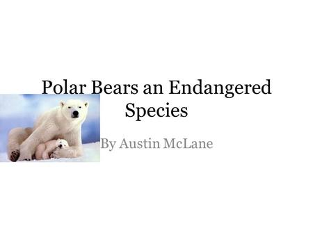 Polar Bears an Endangered Species By Austin McLane.