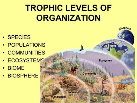 TROPHIC LEVELS OF ORGANIZATION SPECIES POPULATIONS COMMUNITIES ECOSYSTEMS BIOME BIOSPHERE.