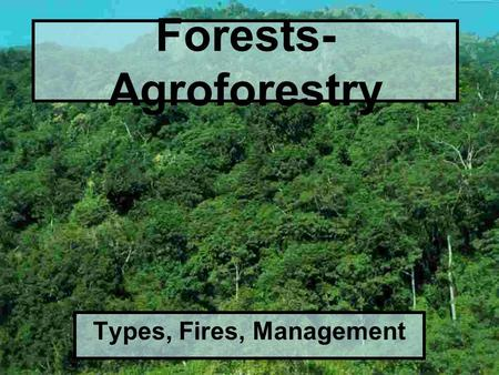 Forests- Agroforestry Types, Fires, Management. Types of Forests Old growth: uncut forests ( <200 yrs old)