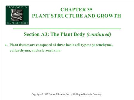 CHAPTER 35 PLANT STRUCTURE AND GROWTH Copyright © 2002 Pearson Education, Inc., publishing as Benjamin Cummings Section A3: The Plant Body (continued)