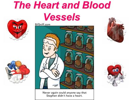 The Heart and Blood Vessels. Lesson objectives By the end of this lesson you should be able to explain: Why there is a requirement for circulatory systems.