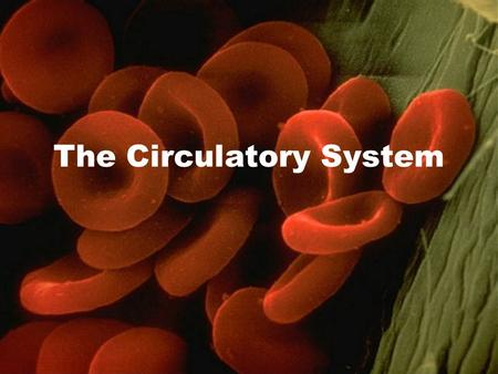 The Circulatory System. Bringing It All Together The role of the circulatory system is basically to connect all of the other systems through transport.