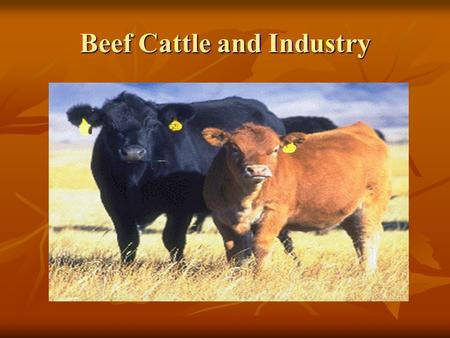 Beef Cattle and Industry. Take notes on the important information from each of the following slides so you have it in your notes.