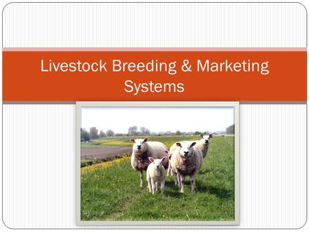 Livestock Breeding & Marketing Systems. Breeding Systems Different systems exist due to the various types of livestock operations Factors to determine.