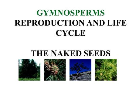GYMNOSPERMS REPRODUCTION AND LIFE CYCLE THE NAKED SEEDS.