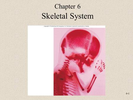 6-1 Chapter 6 Skeletal System. 6-2 Functions Support Protection Movement Storage Blood cell production.