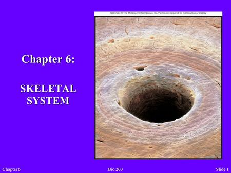 Slide 1Chapter 6Bio 203 Chapter 6: SKELETAL SYSTEM.