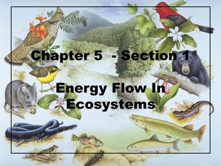 Chapter 5 - Section 1 Energy Flow In Ecosystems. Ecosystem = interacting system that involves both organisms and their nonliving environment includes….