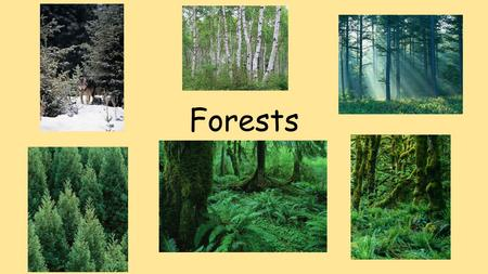 Forests. A Forest is… A habitat that has many trees.