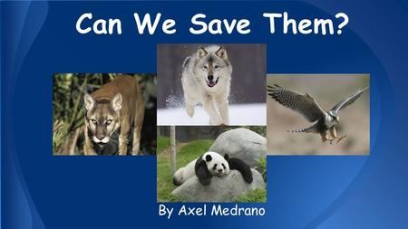 Can We Save Them? By Axel Medrano. Can We Save Them? By Axel Medrano.