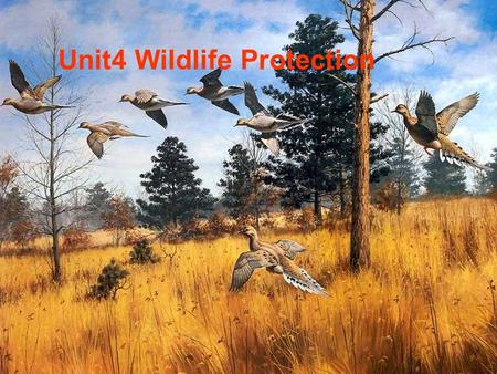 Unit4 Wildlife Protection wildlife: animals or plants which live or grow in natural conditions wild animal Warming Up.