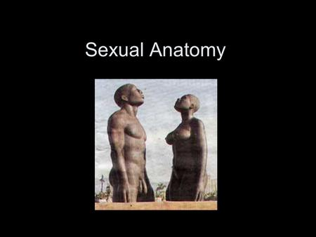 Sexual Anatomy. Male Sexual Anatomy Male Reproductive Anatomy (cross-section)