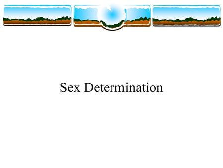 Sex Determination. Sexual Reproduction For most diploid eukaryotes, sexual reproduction is the only mechanism resulting in new members of a species. Meiosis.