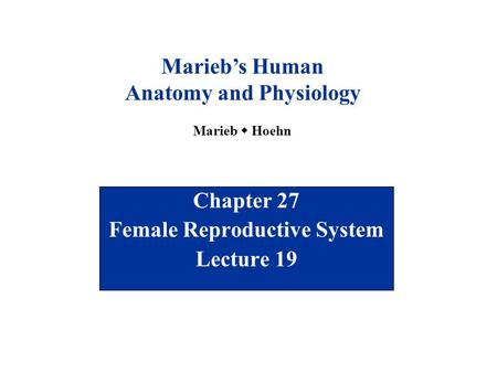 Chapter 27 Female Reproductive System Lecture 19 Marieb's Human Anatomy and Physiology Marieb  Hoehn.
