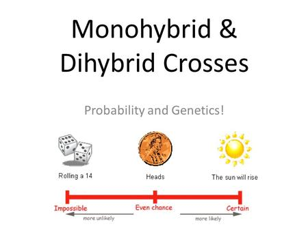 Monohybrid & Dihybrid Crosses Probability and Genetics!