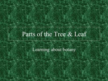 Parts of the Tree & Leaf Learning about botany. Cross Section.