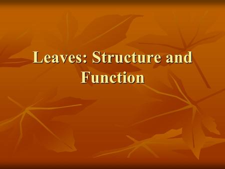 Leaves: Structure and Function. Main Functions 1. Principle sites of photosynthesis 6CO 2 + 6H 2 O 6O 2 + C 6 H 12 O 6 6CO 2 + 6H 2 O 6O 2 + C 6 H 12.